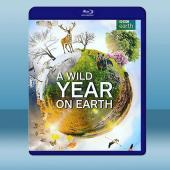 狂野地球 A Wild Year on Earth (2...